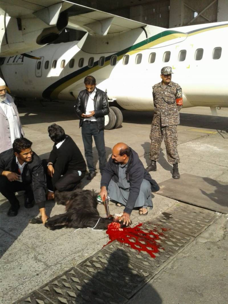 PIA sacrifices black goat to seek divine intervention before resuming ATR flight