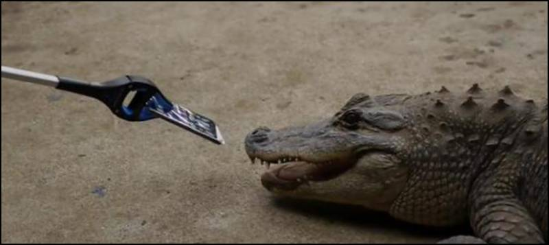 Watch: phone not damaged even after alligator's bite