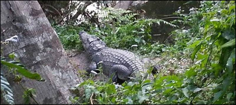 Crocodile Bites Selfie-Seeking Tourist
