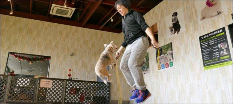 Watch: Athletic dog and owner set new jump roping record