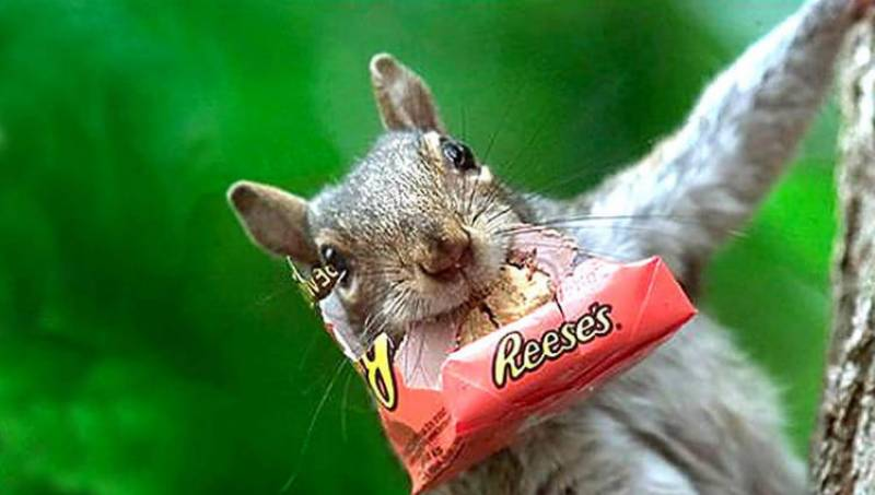 Watch: Sneaky squirrels love to steal candy bars