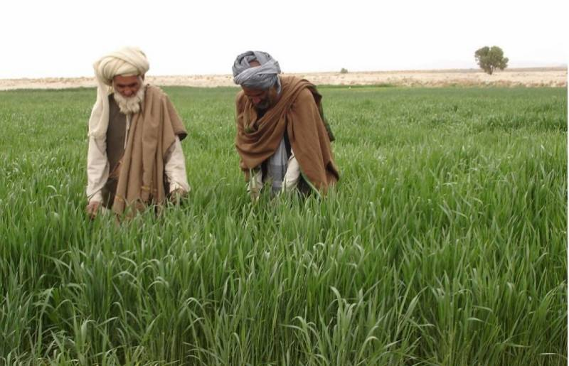 Govt withdraws decision to omit subsidy on fertilizer