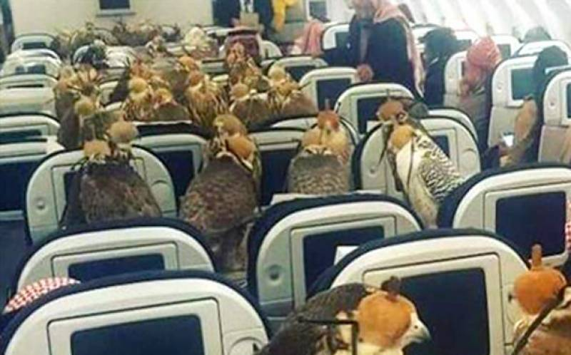 Saudi prince buys 80 tickets of airplane to transport falcons