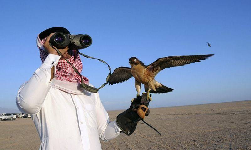 Houbara bustard removed from protected bird list