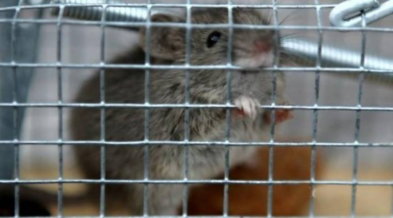 Mouse causes flight delay to San Francisco