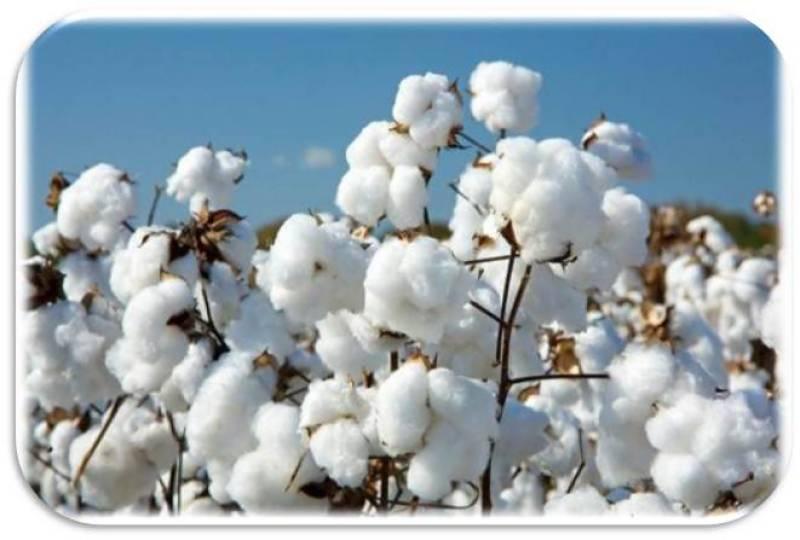 Cotton production reaches 10.07m bales