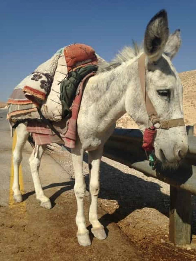 Donkey for tourist…