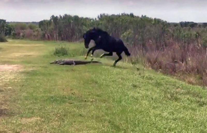 Watch: Wild horse beats alligator