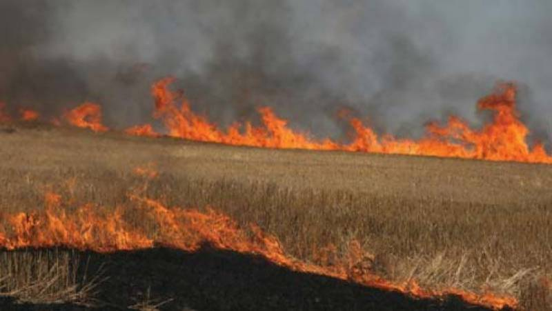 Fire erupts turning wheat into ashes at several acres