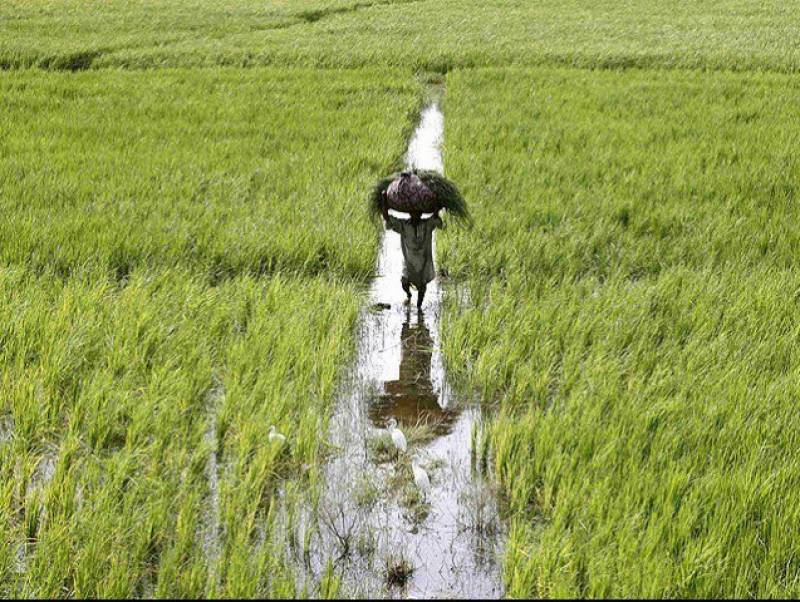 ADB approves $20m loans for Pak agri sector