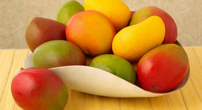 Mango export to increase this year