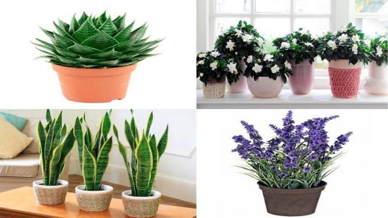 Plants for bedroom to help people sleep better