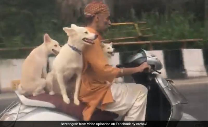 3 Delhi Dogs having great time on Scooter