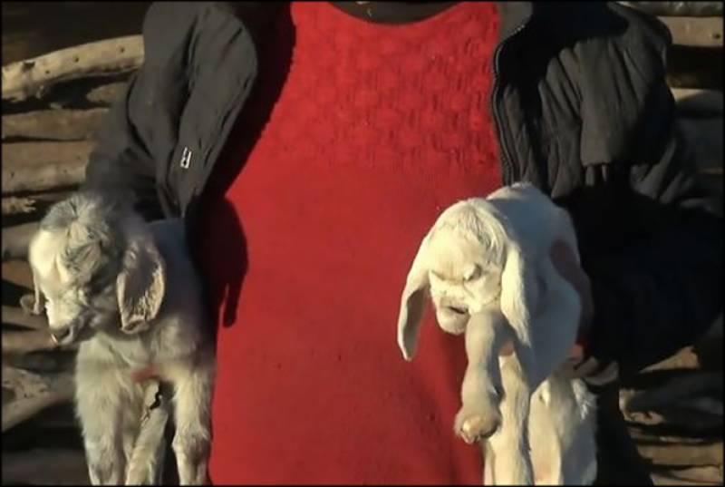 Watch: 'Demon' face goat terrifies people in Argentina