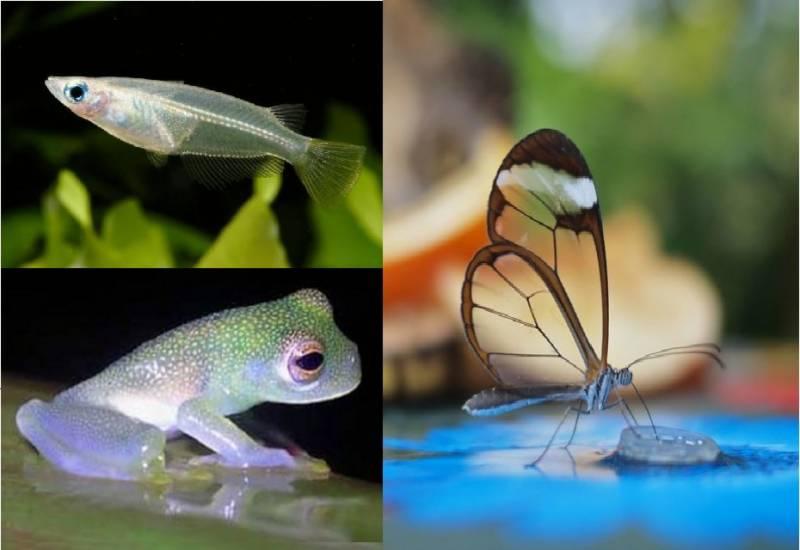 World's unique transparent animals