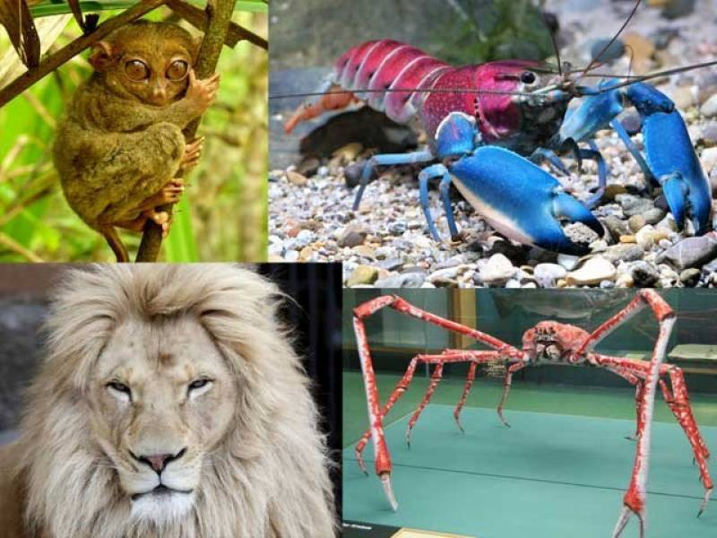 Weird animals around the world