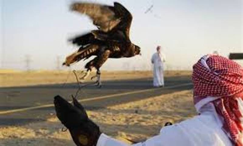 Bahraini king, again in Pakistan to hunt houbara bustard