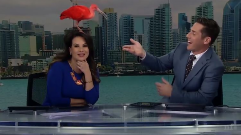 Watch: Anchor maintains her calm while crazy bird interrupts live TV programme