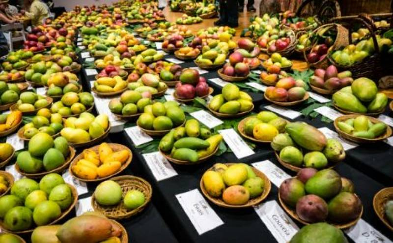 Three days National Mango Festival starts in Mirpurkhas