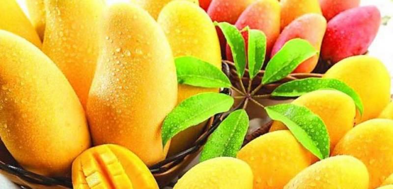 ICCI arranges three-day Mango Festival 2018