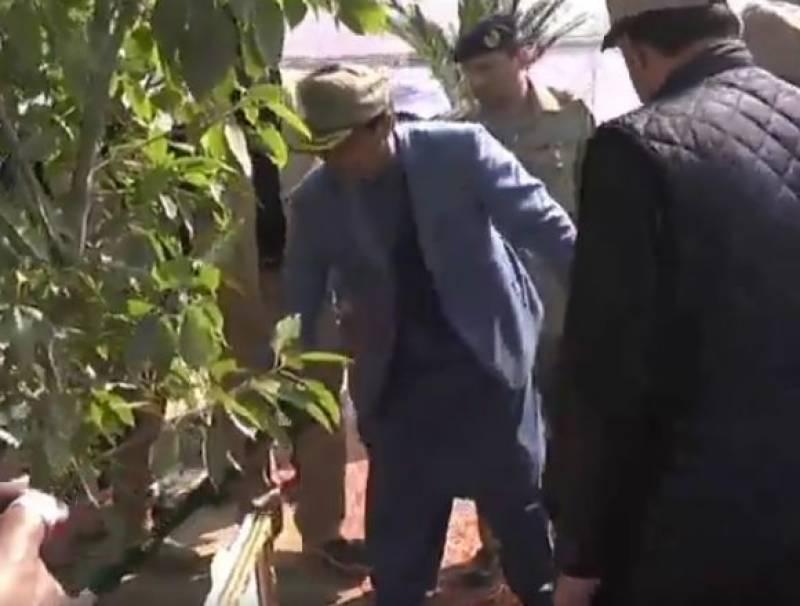 PM Imran spring tree plantation campaign in Mianwali