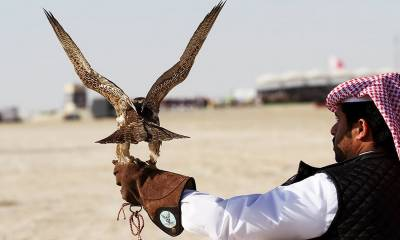 KP denies permission to Qatari prince for hunting Houbara bustard