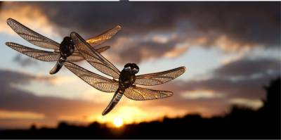 Over trillions of insects migrate every year: research