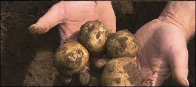 3800-year-old potato garden uncovered