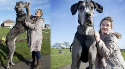 Meet tallest dog in world