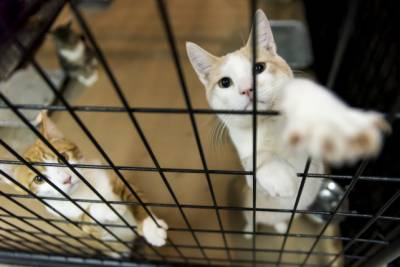 Hundreds of cats segregated in New York City over bird flu outbreak