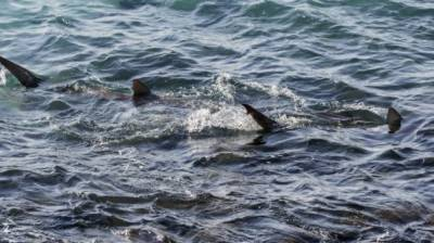 Israel's Mediterranean coast becomes home of sharks
