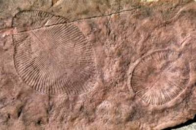 Life was on Earth 4 billion years ago, fossil research