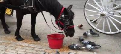 Watch: Friendly horse feeds pigeons