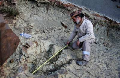 Ancient crocodile eggs remain unearthed from Portugal cliffs