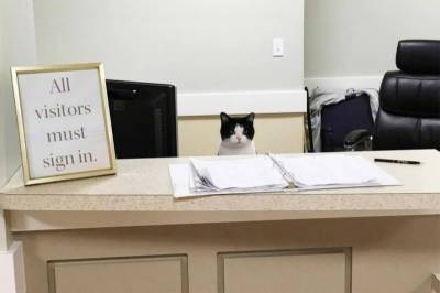 Cat hired as receptionist at nursing home