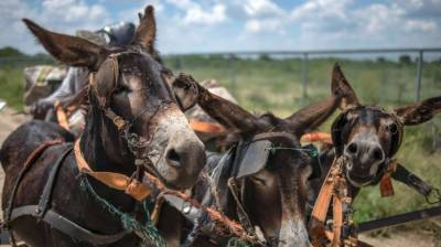 About 5,000 donkey hides recovered, Chinese man held