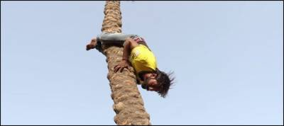 Watch: Man's skill to climb trees backwards