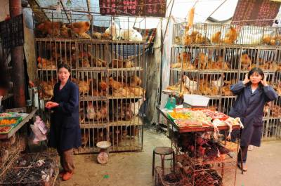 Two Chinese cities close poultry markets
