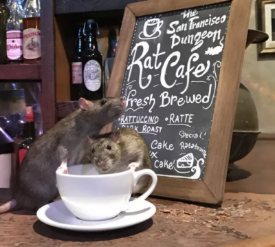 Dine with rats at 'The Rat Café' only for $50