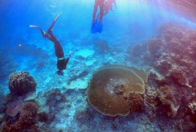 UNESCO excludes Great Barrier Reef from