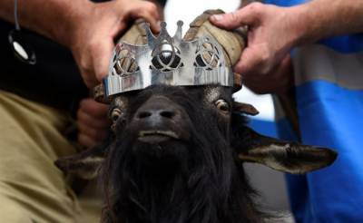 Goat crowned as King in Irish town