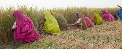Pesticide poisoning kills 20 farmers, hundred others hospitalised