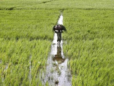 WB approves $300m for agriculture reforms in Punjab