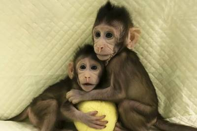 Scientists successfully clone Monkeys
