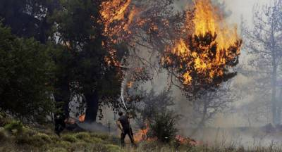 Death toll in Greece forest fires reaches 50