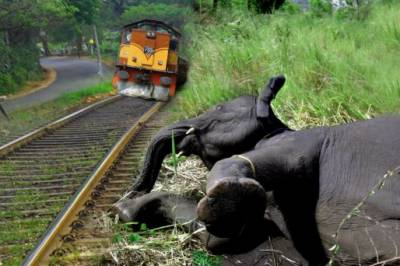 Two elephants die in Sri Lanka train collision