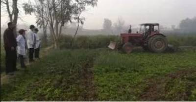 PFA destroys vegetables irrigated from untreated wastewater